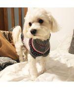 cotton tulear sweater