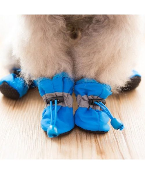 dog snow shoe