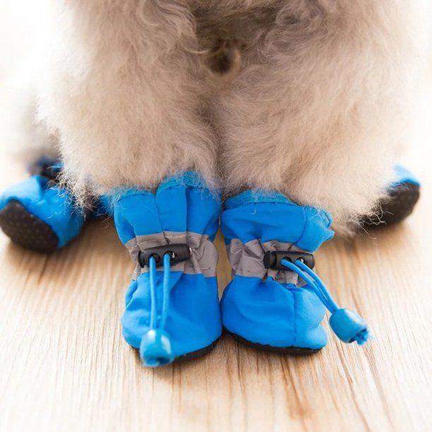 chaussure neige chien