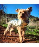 manteau pour chien doré