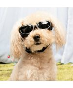 Sunglasses for small dog boutique Maw Love
