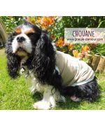 t-shirt pour cavalier king charles