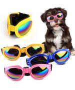 Lunette de soleil pour chien