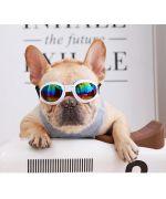 lunette pour grand chien bouledogue