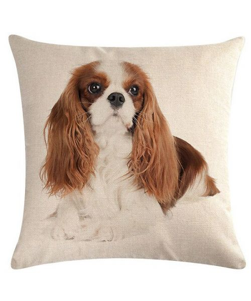 coussin cavalier king charles
