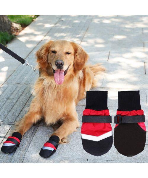 large dog shoes