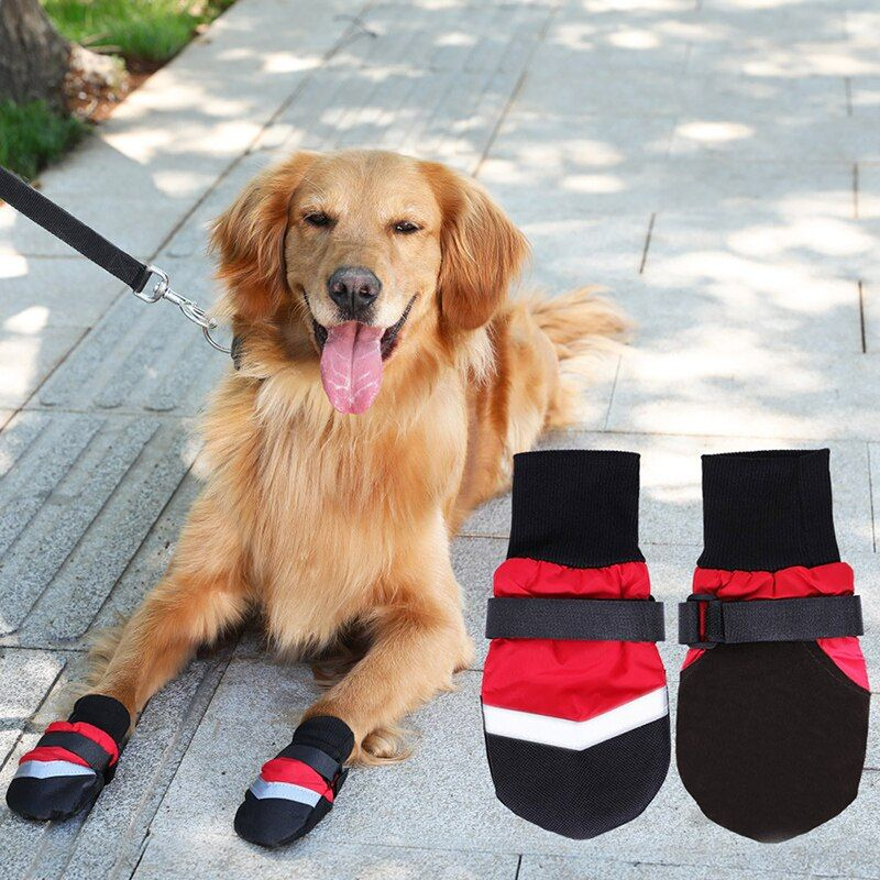 chaussures pour grand chien