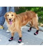 shoes for large dogs
