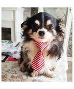 Cravate pour petit chien