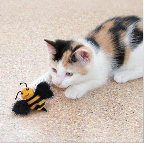 jouet pour chat scintillant