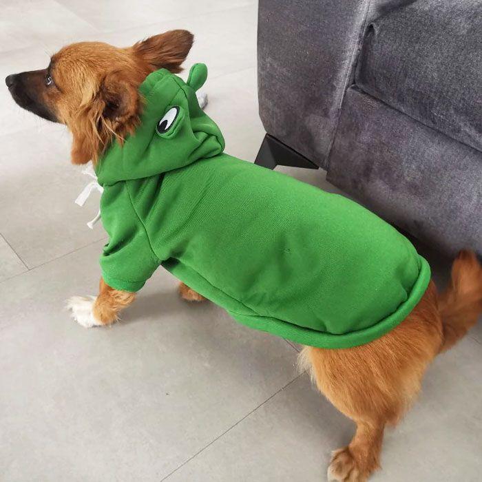 frog dog sweatshirt