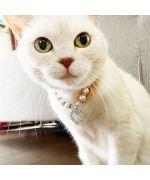 collier pour chat en strass