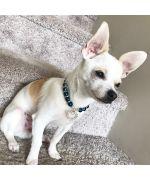 collier pour petit chien en perle