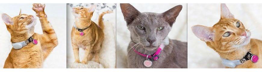 Médaille et identification pour chat