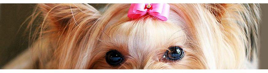 Elastics for dogs