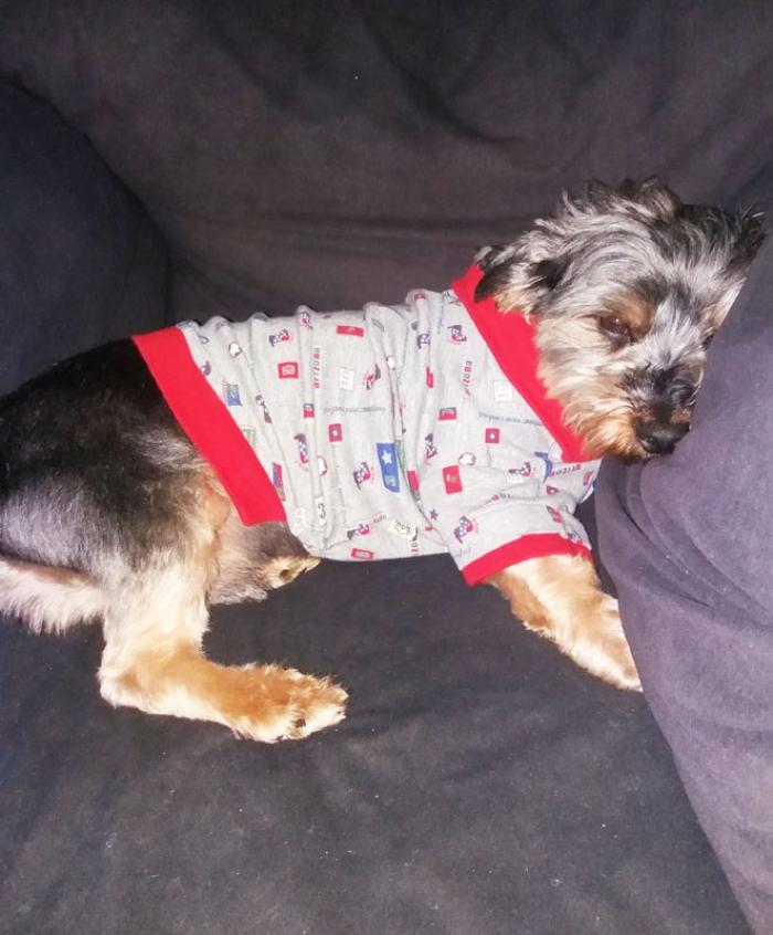 pyjama pour chien de qualit u00e9