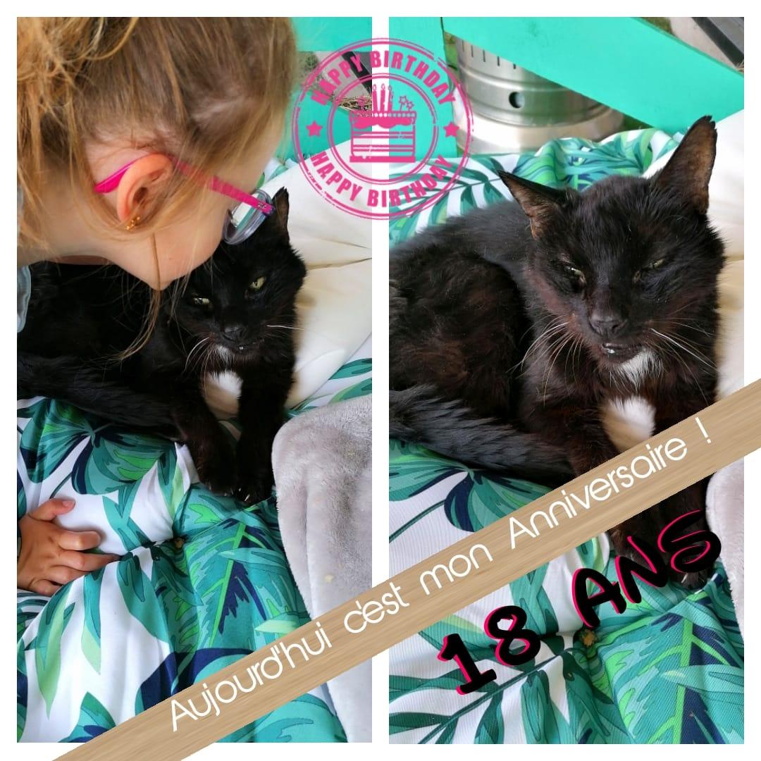 Kiki chat de 18 ans !