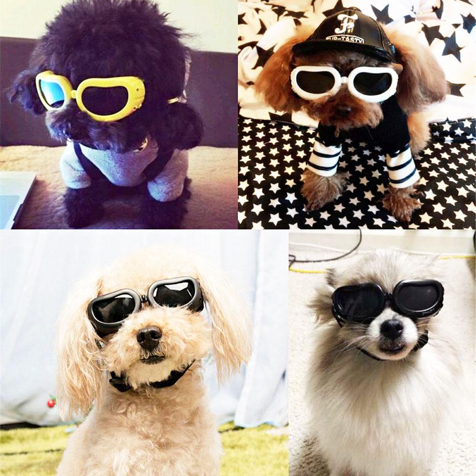 lunette pour petit chien
