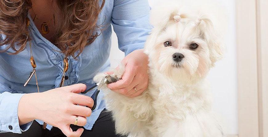 Comment couper les ongles de son chien ?