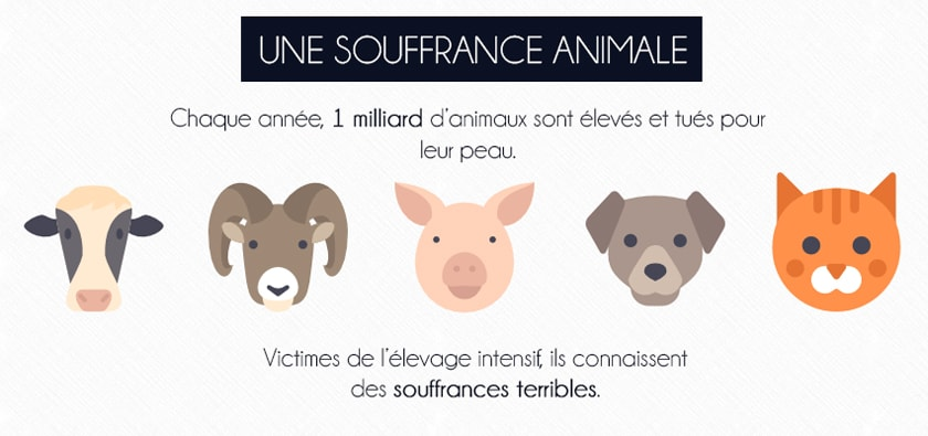 les raisons de ne pas acheter du cuir souffrance animale