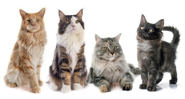 Boutique pour chat Gueule d'Amour