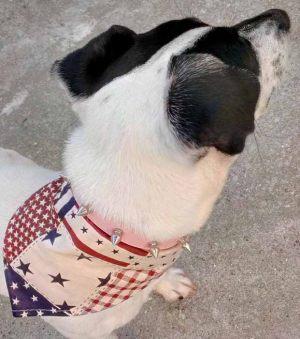 Bandana pour chien América