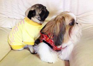 Carlin - Pull pour chien molletonné jaune - Taille XL