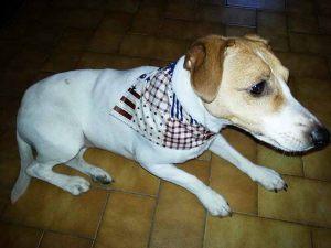 Jack Russel - Bandana pour chien América