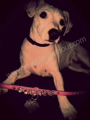 belle jack russel aves son collier prenom strass gueule d amour-min