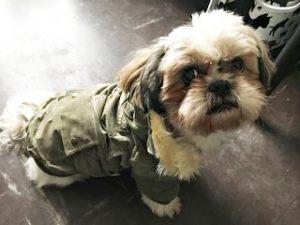 Manteau pour chien en velour Urban Brown / Loulou / Taille 2XL