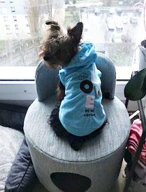 Pull pour chien en velour - bleu / Noé / Taille L