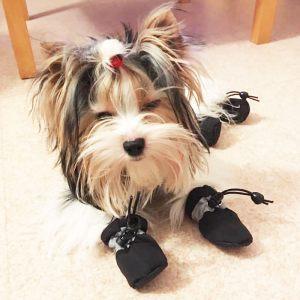 Chaussures pour chien et chat bottines fourrées - noir / Oural / Taille S