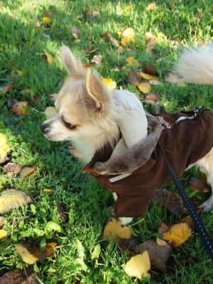 Manteau pour chien en suedine marron - Yorkshire - Mikado - Taille M