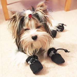 Chaussures pour chien noir - Yorkshire - Oural - Taille S