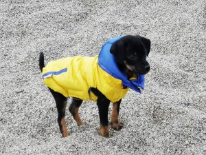 Imperméable léger imperméable pour chien Sportwear - Chihuahua - Taille XS