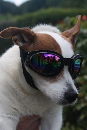 Virgule portant ses lunettes de protection