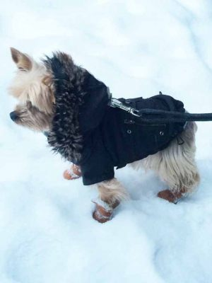 Yorkshire - Manteau pour chien velour Angel - Taille M