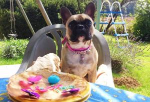 Bouledogue Français - Collier pour chien personnalisable rose - Tour de cou 36 à 45 cm
