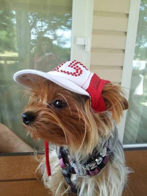 Yorkshire - Casquette pour chien strass rouge - Taille M