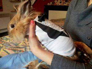 Petit Lapin - T-shirt pour chien So Chic Gueule d'Amour - Taille S