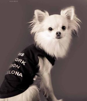 Chihuahua - T shirt pour chien Gueule d'Amour traveler - Taille S