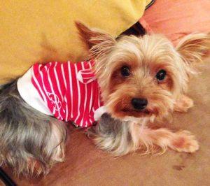 Yorkshire - T-shirt pour chien marin rouge - Taille L