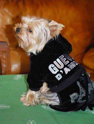 Léon - Yorkshire Terrier - Jogging pour chien Gueule d'Amour - Taille L