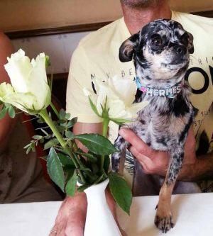 Ermès - Collier pour chien personnalisable bleu - Tour de cou 21 à 28 cm