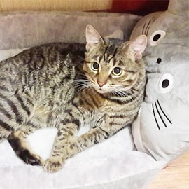 Paniers pour chat