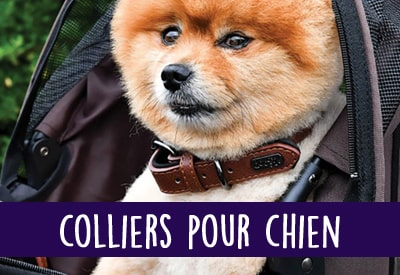 d857f3357f61bb Gueule d Amour®   Collection Vêtements chiens, chats, Chihuahuas ...