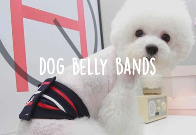 Dog belly bands